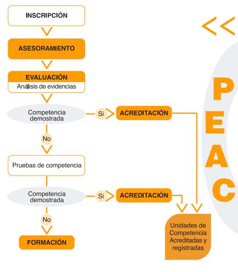 Fases PEAC folleto web